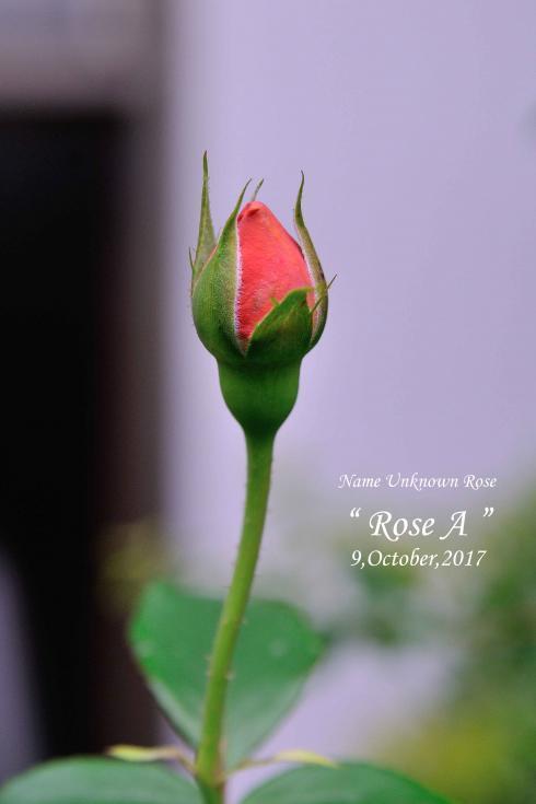 DSC_5662-L_convert_20171011064846.jpg