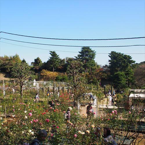 ゆうブログケロブログセテュヌボンニデーとばら苑 (2)