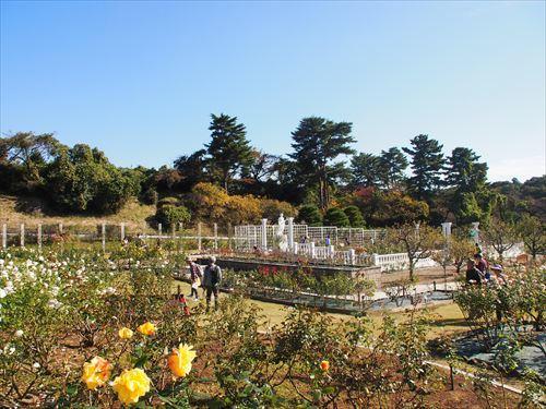 ゆうブログケロブログセテュヌボンニデーとばら苑 (5)
