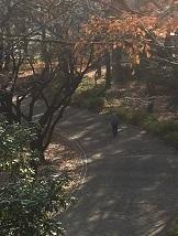 centralpark14.jpg