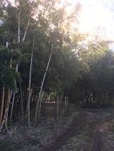 kamiyasumatsu11.jpg