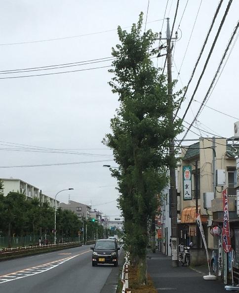 kyohachi12.jpg