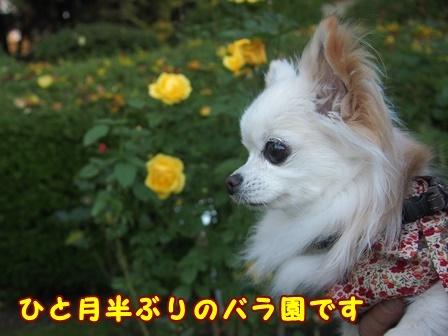 bloga386a.jpg