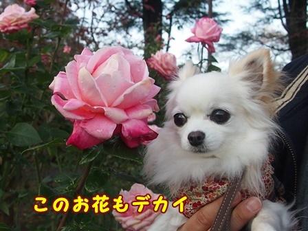 bloga389a.jpg