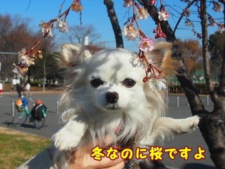 bloga516a.jpg