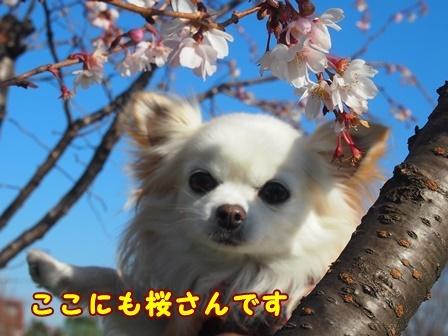 bloga518a.jpg