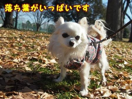 bloga519a.jpg
