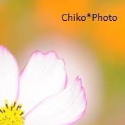 chiko*