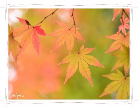photo-750 秋色1