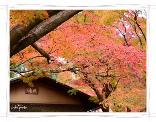 photo-754 秋色5-1