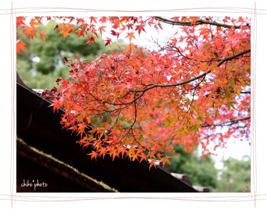 photo-755 秋色6-2