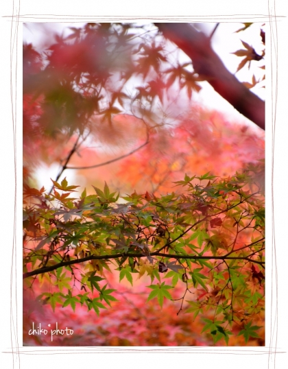 photo-751 秋色2