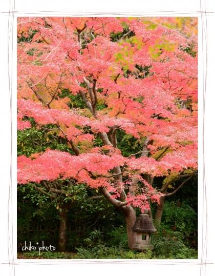 photo-755 秋色6-1
