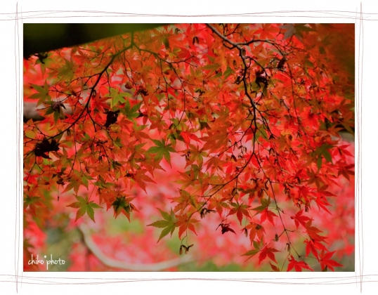 photo-753 秋色4