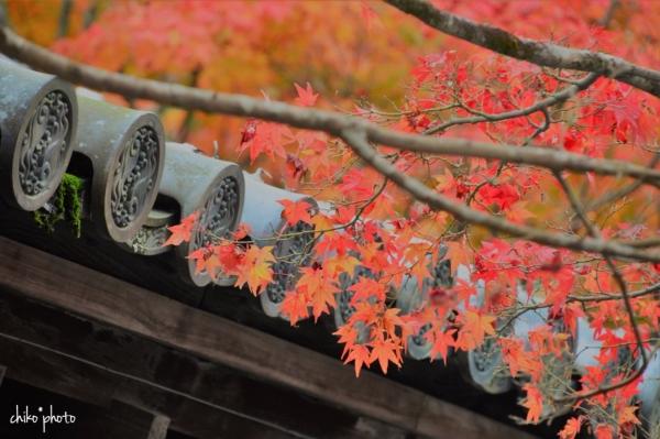 photo-758 秋の京都にて 3-1