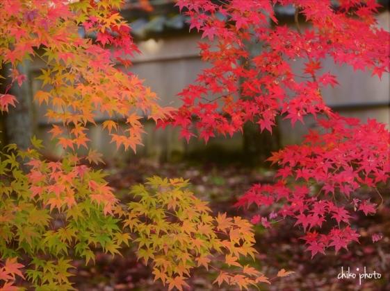 photo-767 秋の万博公園にて 5