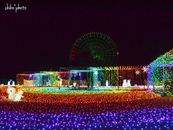 photo-771 万博記念公園イルミナイト2