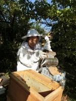 煙でミツバチに移動してもらいます