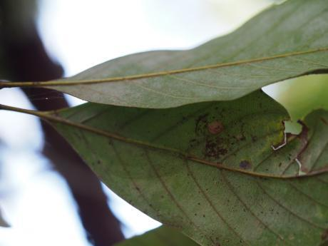クサカゲロウの一種4