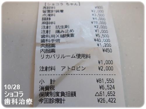 ショコラの歯科治療費