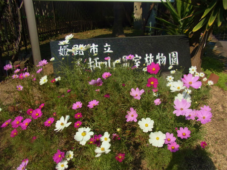 syukusyo-RIMG1283_20171105184208fc7.jpg