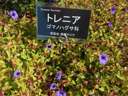syukusyo-RIMG1285.jpg