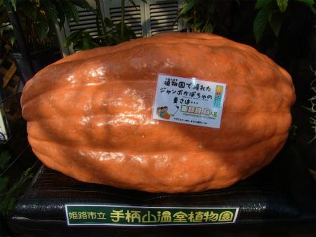 syukusyo-RIMG1293.jpg