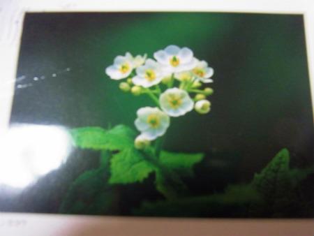 syukusyo-RIMG1400.jpg