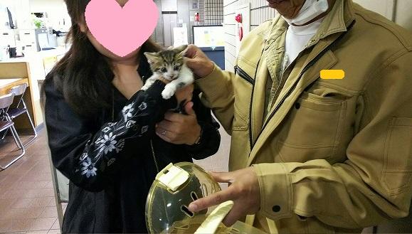 負傷子猫ちゃん譲渡 011