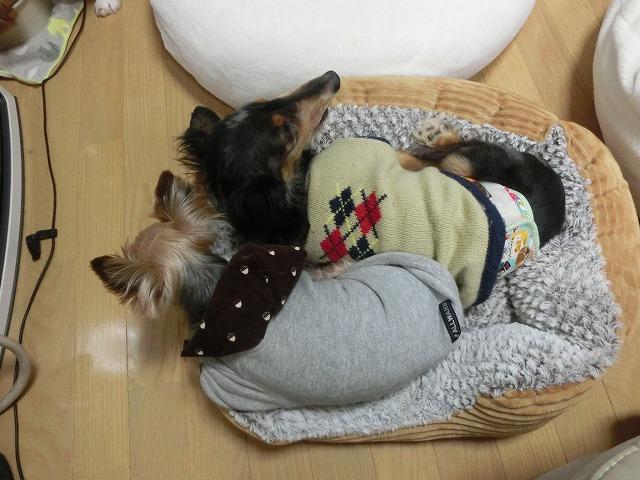預かりっこの今~猫ちゃん編~ 003