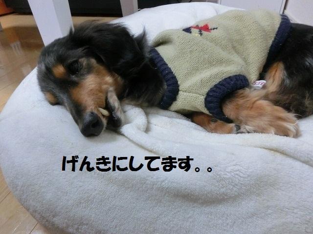 新入り猫ちゃんとアポちゃん耳掃除 002