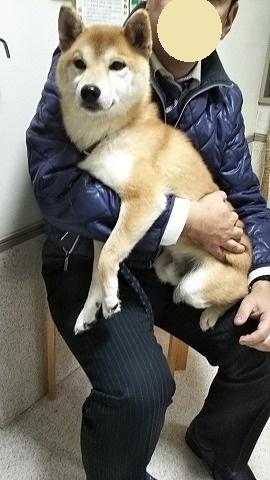 柴犬ムサシ登場!とキジ太郎動画 011