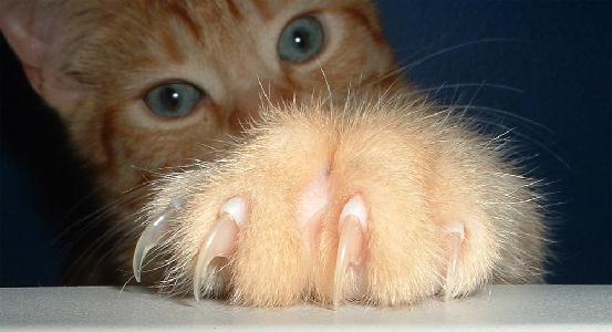 猫  爪 2