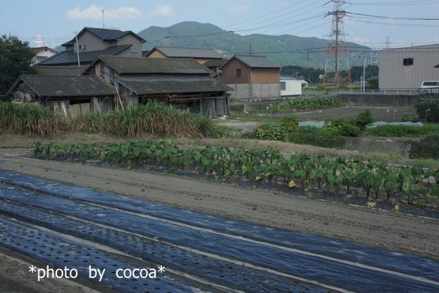 DSC00606 2017-10-09 14-39-04