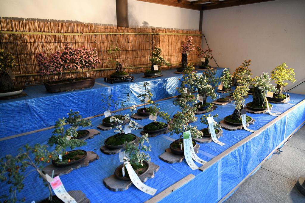 菊祭り 2