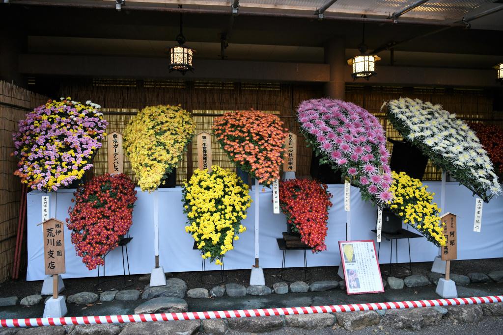 菊祭り 4
