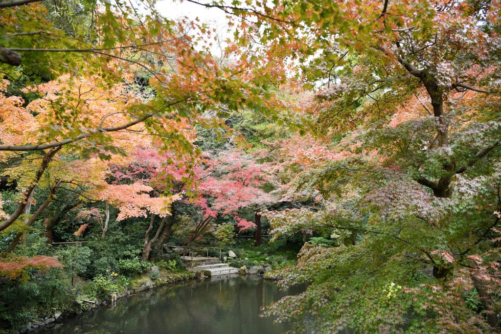 柳原池の紅葉