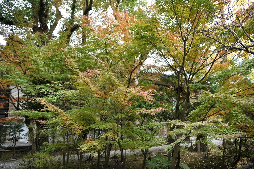 鎌倉国宝館前の紅葉 1