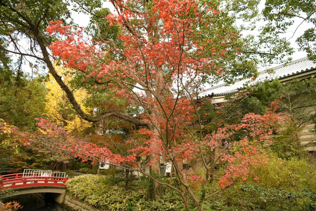 鎌倉国宝館前の紅葉 2