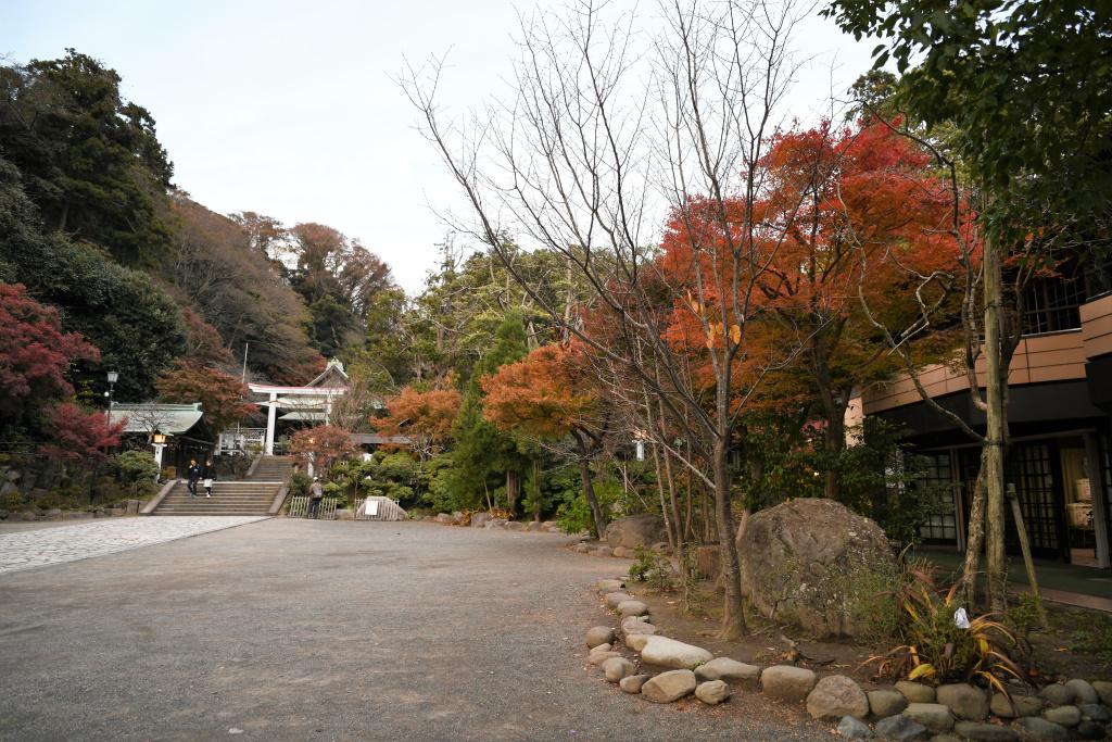鎌倉宮の紅葉