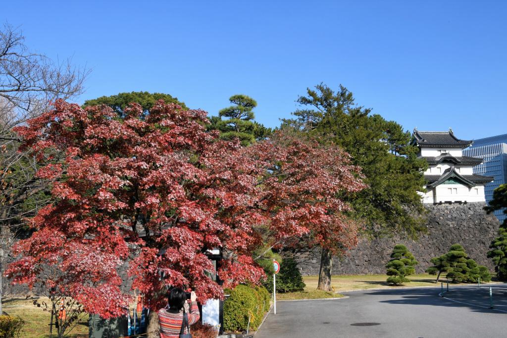 富士見櫓と紅葉