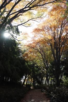 shuku_IMG_0526.jpg