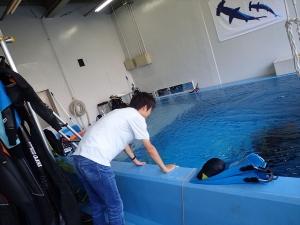 ダイビング自社プール (1)