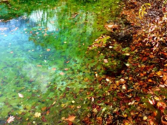 青森・田代平湿原の紅葉<トリップノート10月公開記事>