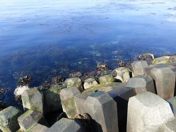 美しく青く輝く陸奥湾の海