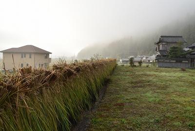 171026稲刈り (7)