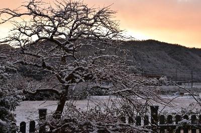 171214雪の朝 (11)