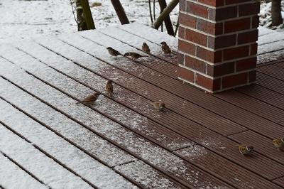 171214雪の朝 (1)