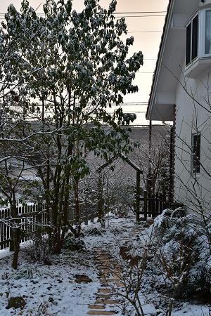 171214雪の朝 (5)