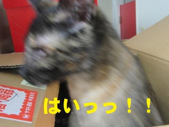 IMG_2833 (560x420)